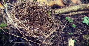 Last year's nest